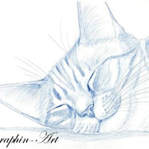 2013-03-015 Cat Drawing