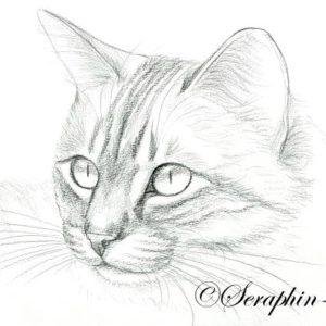 2013-03-016 Cat Drawing