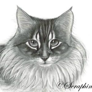 2014-11-012 Graphite Drawing Cat