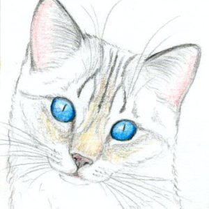 2018-02-172 Cat Pencil Drawing ACEO