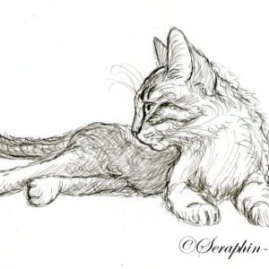 2018-04-211 Cat Ink Drawing ACEO