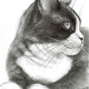 2018-12-101 Cat Graphite Drawing