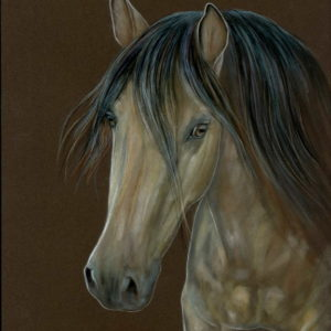 2018-12-201 Andalusian PRE Horse Pencil Drawing