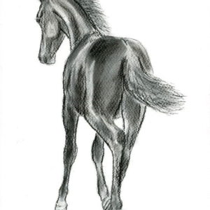 2013-03-003 Friesian Filly Charcoal Drawing
