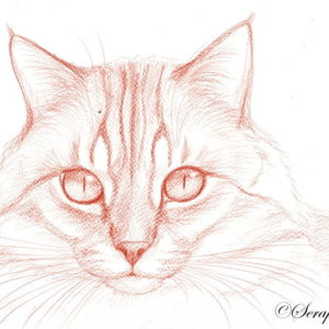 2013-03-005 Cat Pencil Drawing