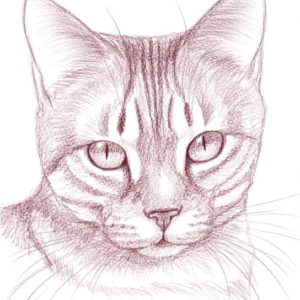 2014-01-017 Cat Pencil Drawing