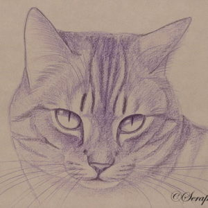 2014-01-019 Cat Pencil Drawing