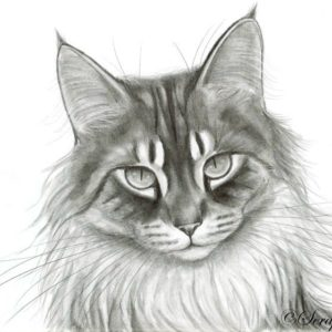 2015-05-009 Cat Graphite Drawing