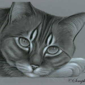 2015-05-010 Cat Pencil Drawing