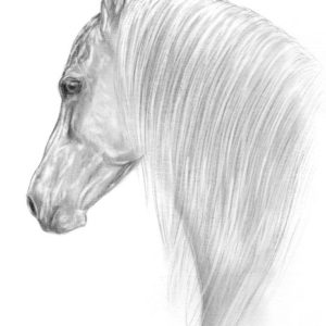 2019-05-037 Andalusian Horse Graphite Drawing