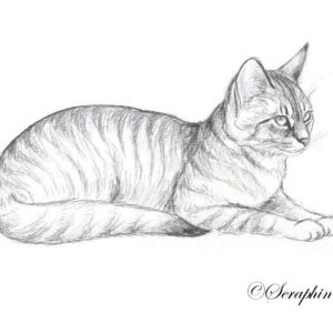 2019-05-053 Cat Graphite Drawing