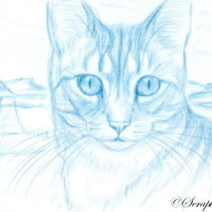 2019-05-075 Cat ACEO Pencil Drawing