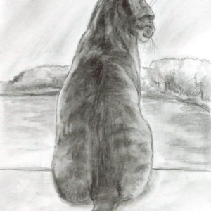 2019-06-001 Tabby Cat ACEO Graphite Drawing