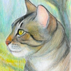 2019-06-051 Tabby Cat ACEO Drawing