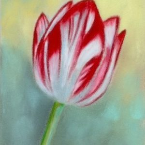 2019-07-039 Tulip Pencil Miniature ACEO Painting