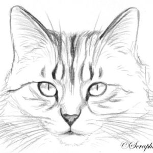 2019-08-005 Cat ACEO Miniature Pencil Drawing