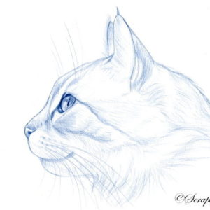 2019-08-054 Cat Pencil Drawing