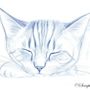 2019-08-055 Cat Pencil Drawing
