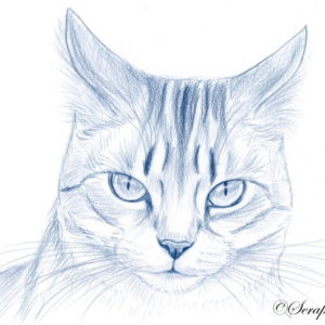 2019-08-072 Blue Cat Pencil Drawing