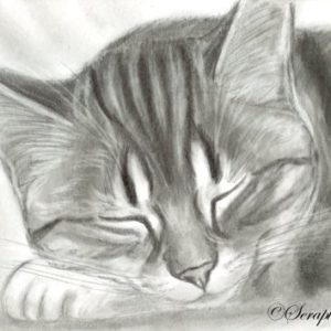 2019-08-073 Sleeping Cat ACEO Graphite Drawing