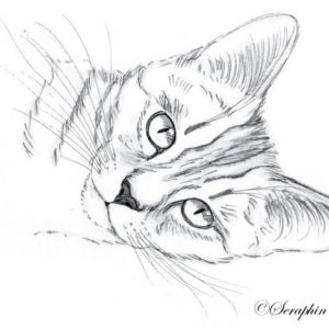 2019-09-001 Cat Ink Drawing