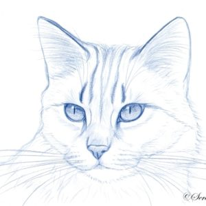 2019-09-021 Cat Pencil Drawing