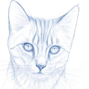 2019-09-022 Cat Pencil Drawing