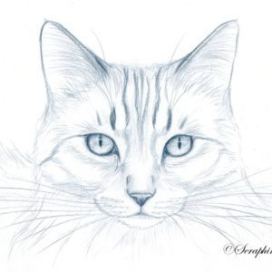 2019-09-023 Cat Pencil Drawing