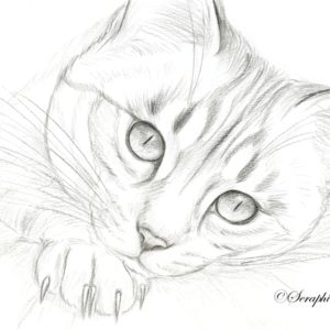 2019-09-029 Cat Pencil Drawing