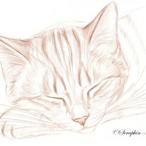 2019-09-030 Cat Pencil Drawing