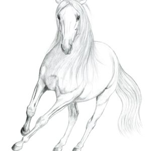 2019-09-201 PRE Stallion Graphite Drawing