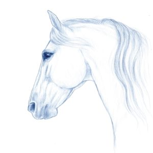 2019-09-204 Horse Pencil Drawing