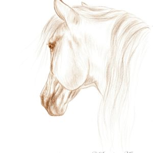 2019-09-205 Horse Pencil Drawing
