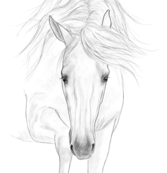 2019-09-032 PRE Stallion Graphite Drawing