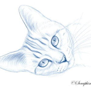 2019-08-063 Cat Pencil Drawing