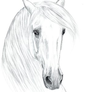 2019-09-202 PRE Stallion Graphite Drawing